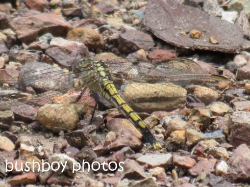 dragonfly_named_home_feb 2015
