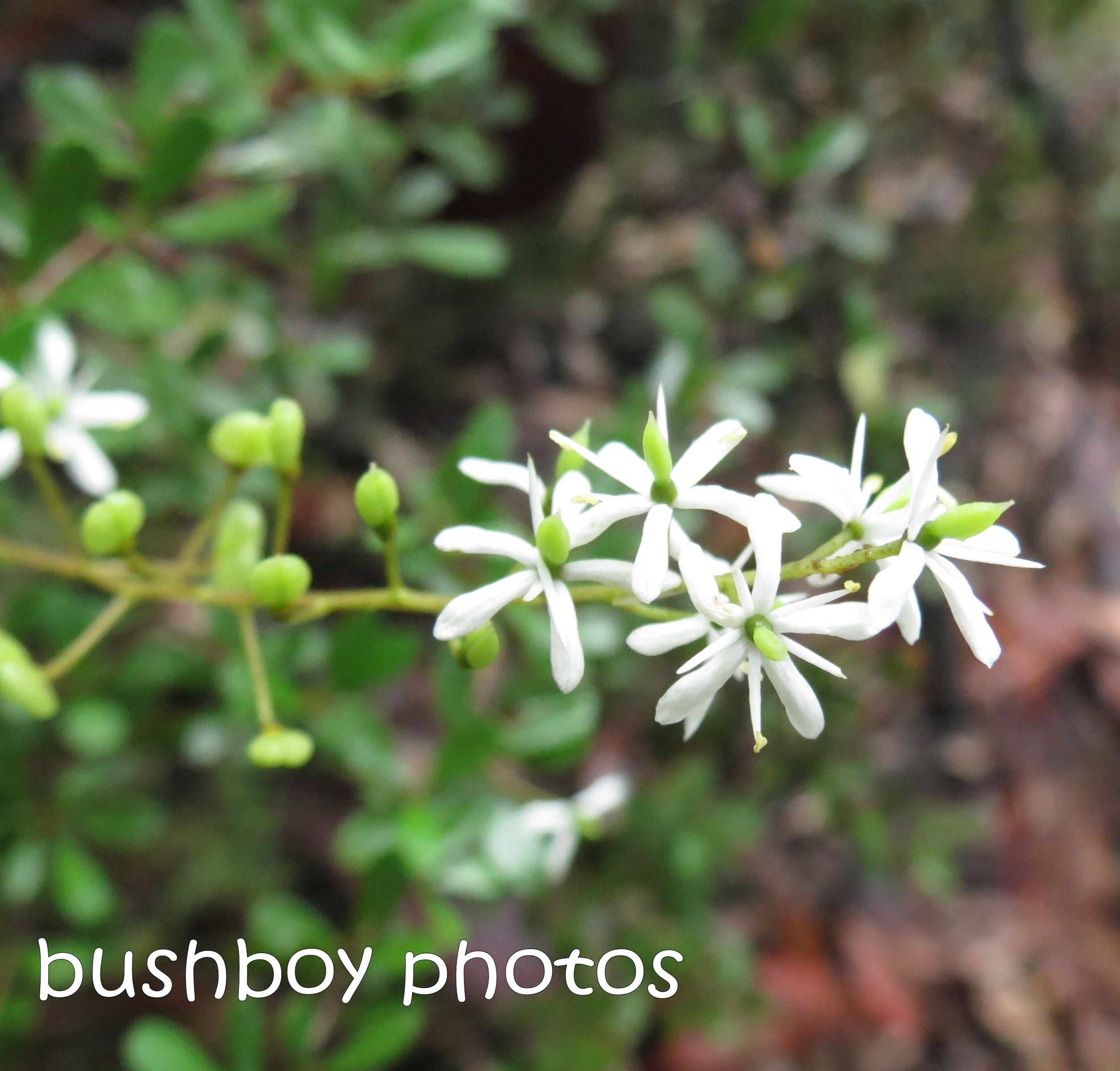 white flower_named_home_feb 2015
