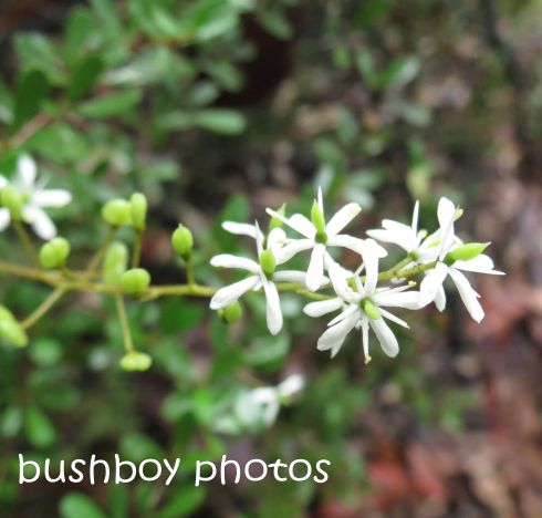 white flower_named_home_feb 2015
