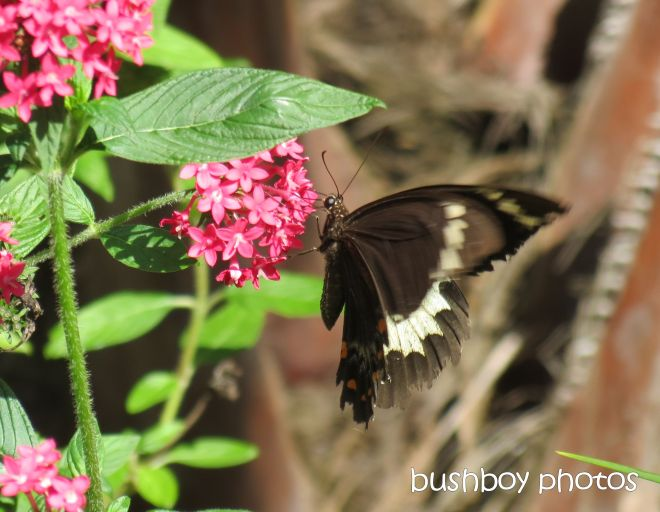 butterfly_name_home_march 2015