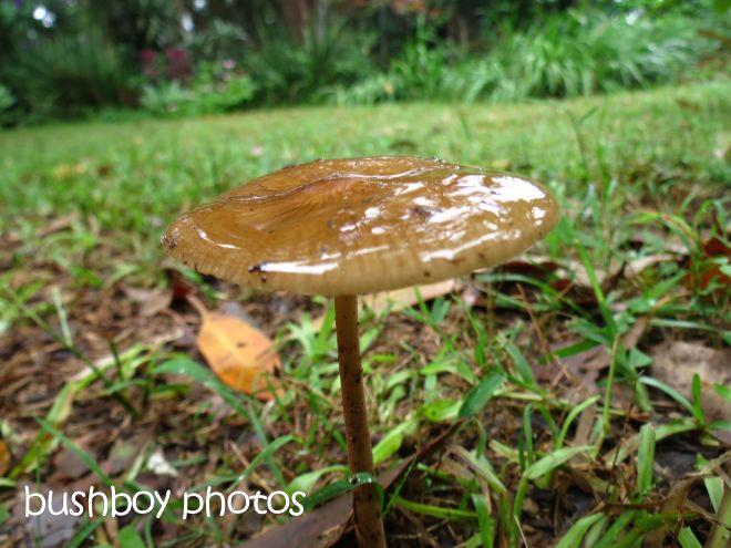 fungi_wet_named_binna burra_april 2015