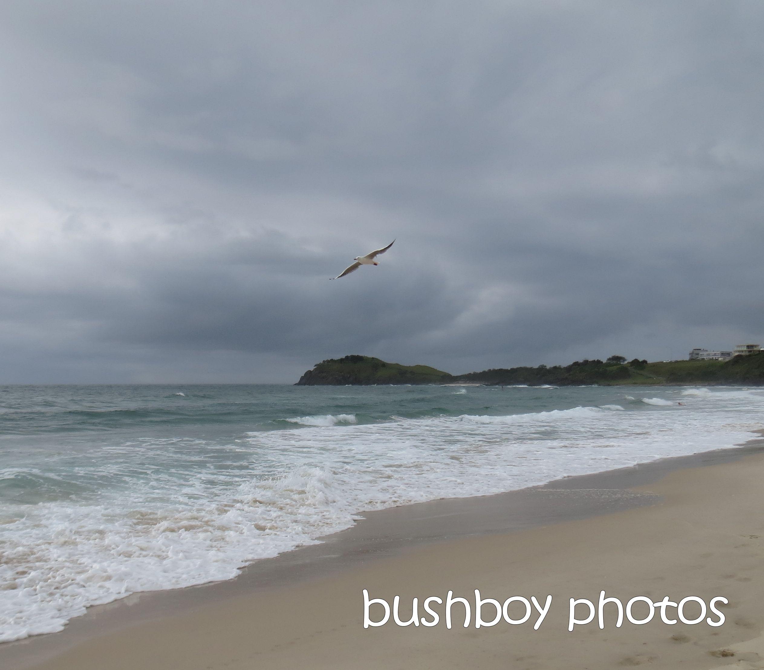 seagul flying_named_cabarita beach_march 2015