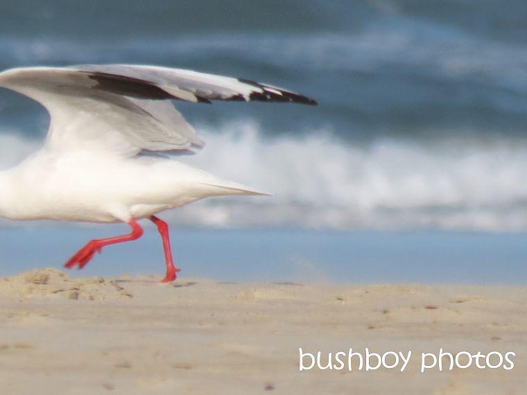 seagull going_named_broken head_april 2015