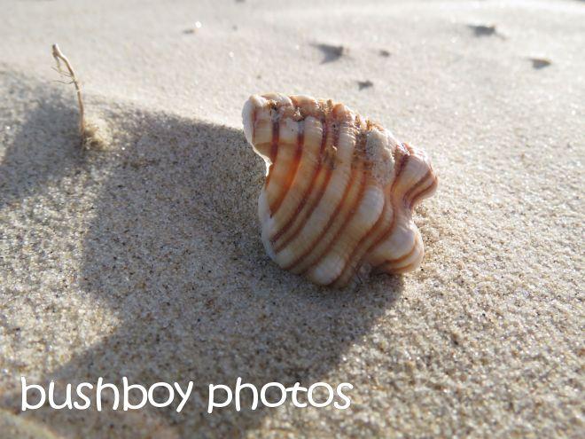 shell_named_broken head_april 2015