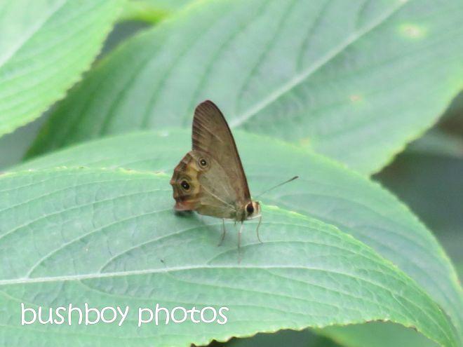 skipper_butterfly_named_binna burra_april 2015