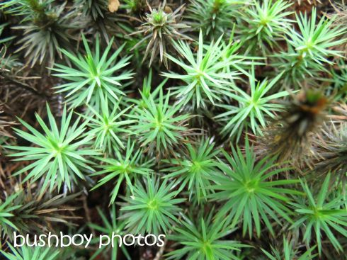 star moss_named_binna burra_april 2015