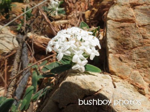 white flowers_named_broken head_april 2015