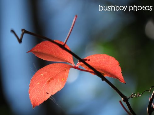 autumn colours_named_home-may 2015