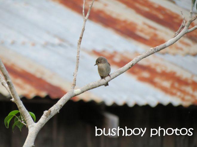 bird_named_home_may 2015