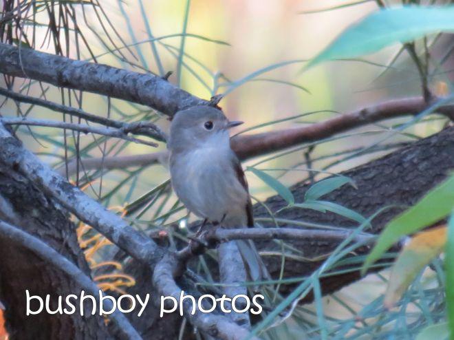 bird_named_small_home_may 2015