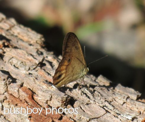 butterfly_crop_named_home_june 2015