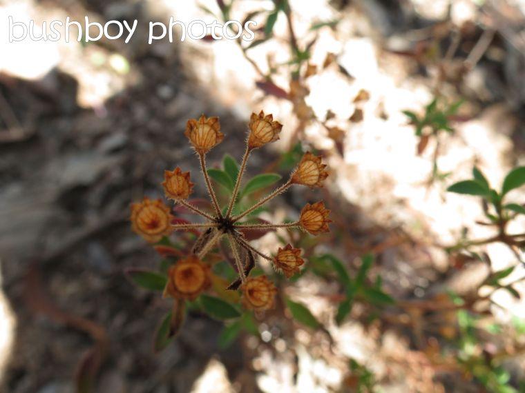 flower stalk_named_home_june 2015