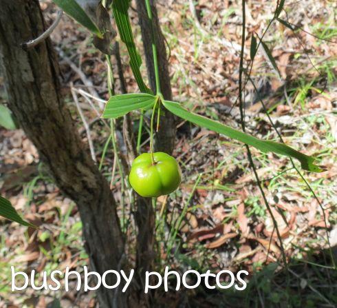 fruit_vine_crop_named_home_june 2015