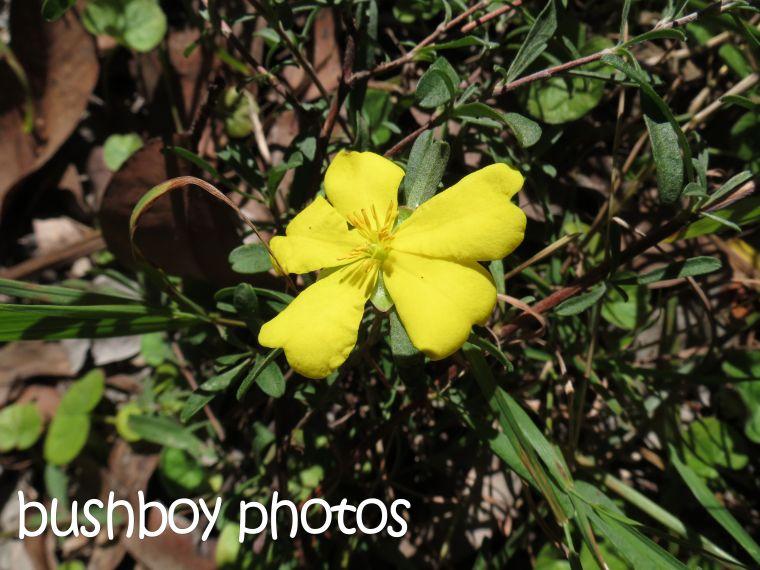 yellow flower_named_home_june 2015