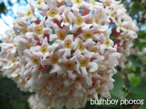 flower01_named_binna burra_august 2015