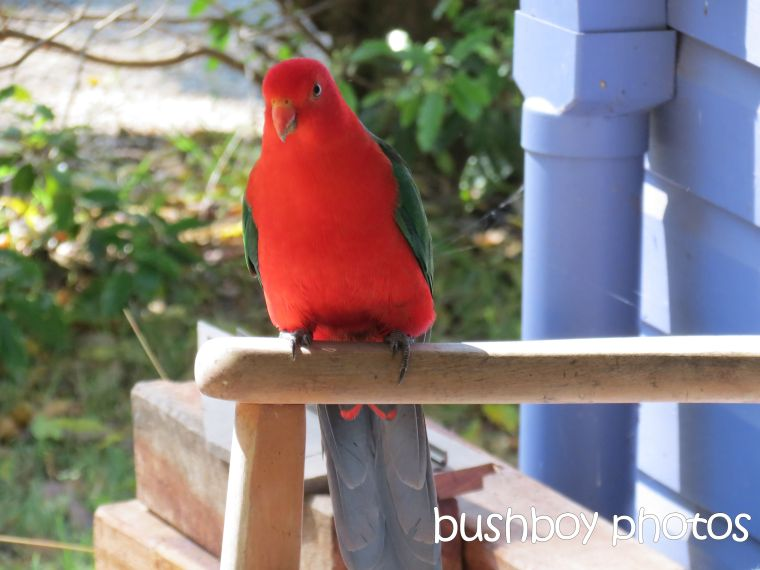 king parrot_named_home_august 2015