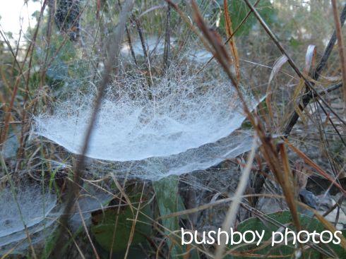 spider webs_purgatory ck rd_named_august 2015