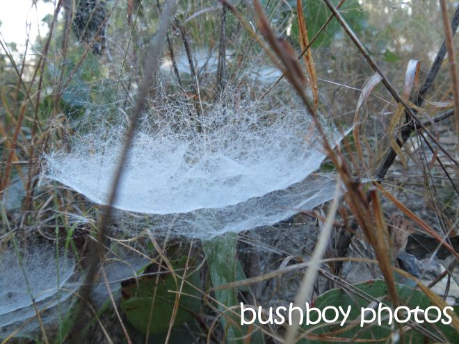 spider webs_purgatory ck rd_named_august 2015