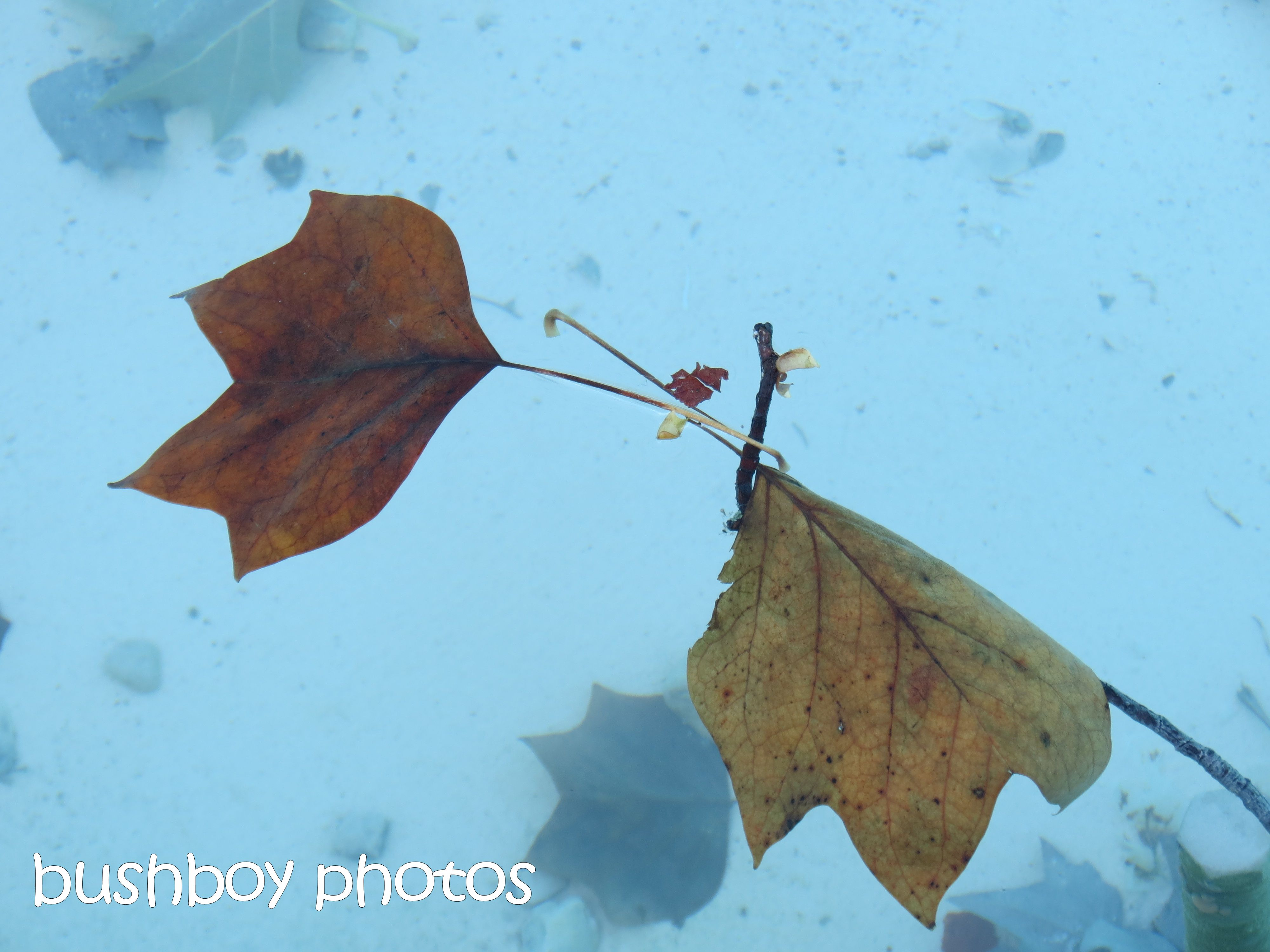 leaves_dijon_named_oct 2015