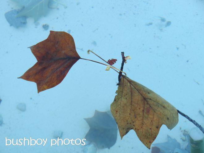 leaves_dijon_named_oct 2015