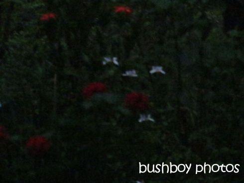 night garden_binna burra_named_nov 2015