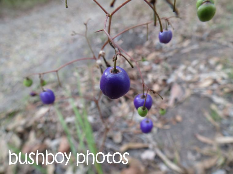 purple fruit_home_named_nov 2015