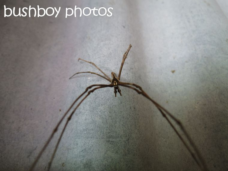 spider_binna burra_named_dec 2015