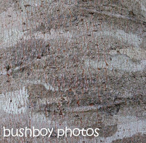 tree bark textures_binna burra_named_ dec 2015
