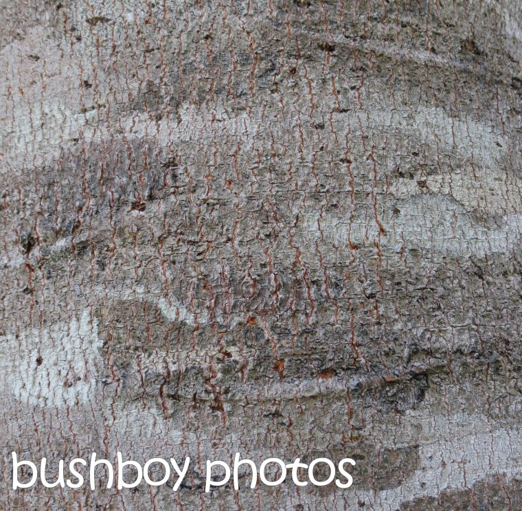 tree bark textures_binna burra_named_ dec 2015