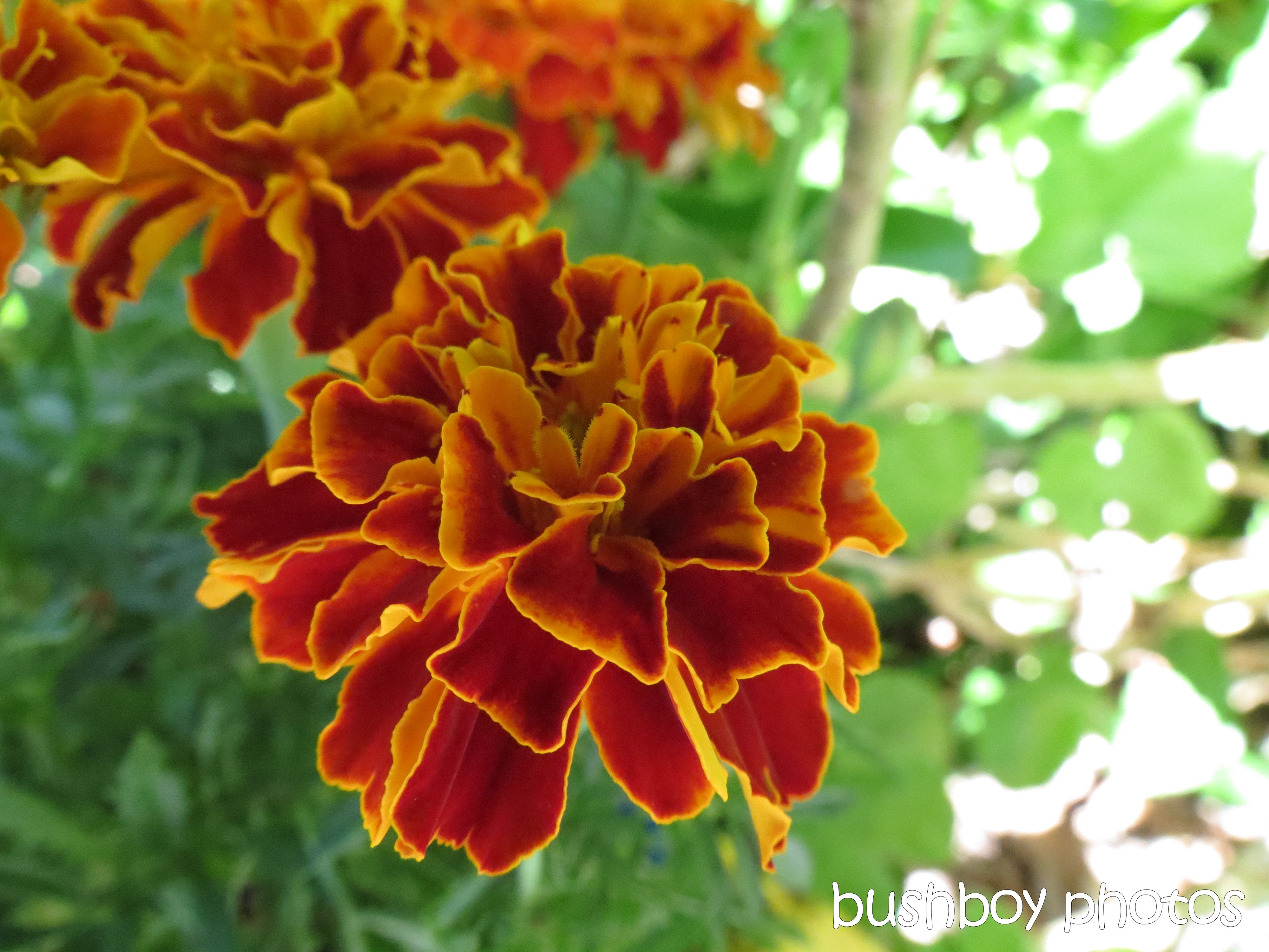 flower_binna burra_named_dec 2015