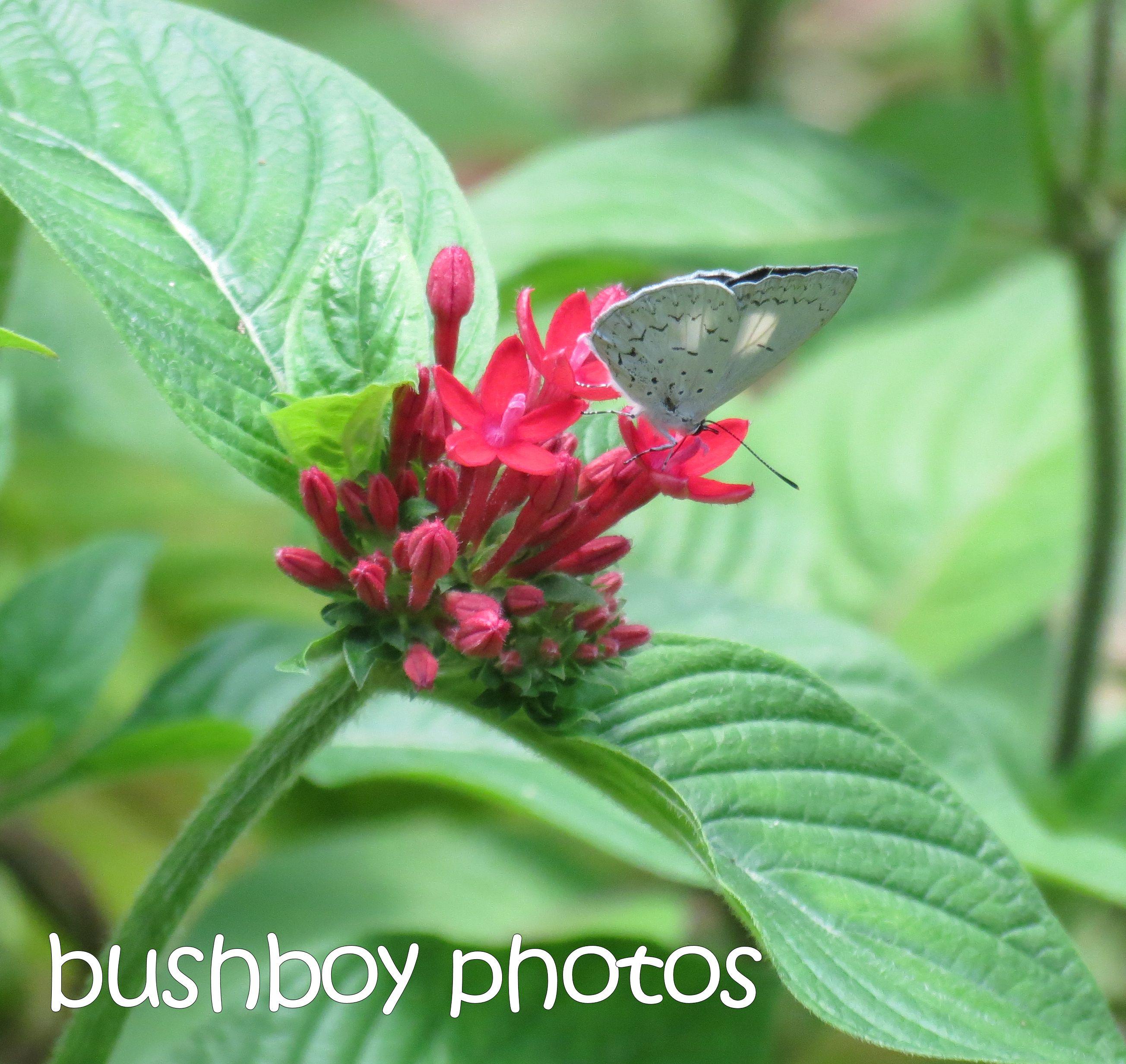 butterfly01_binna burra_named_feb 2016