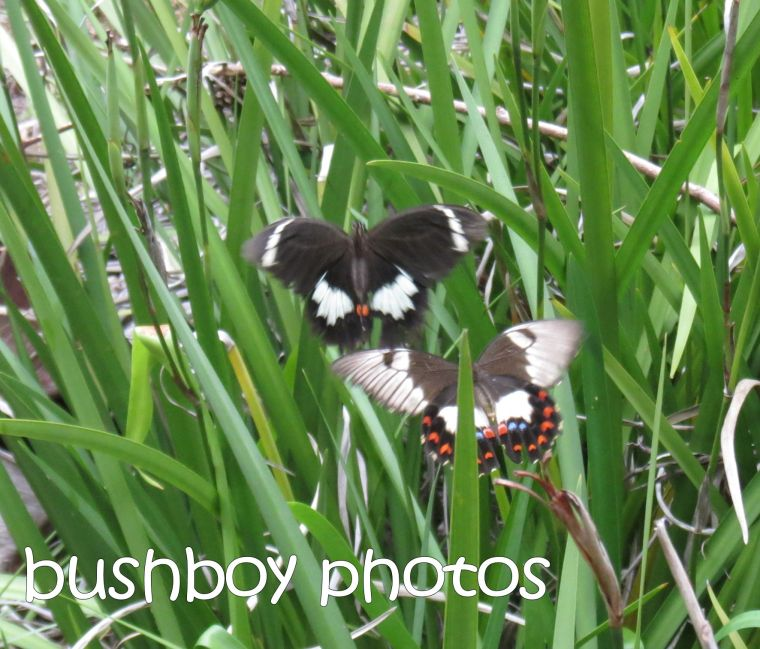 orchard butterflies01_home_crop_small_named_march 2016