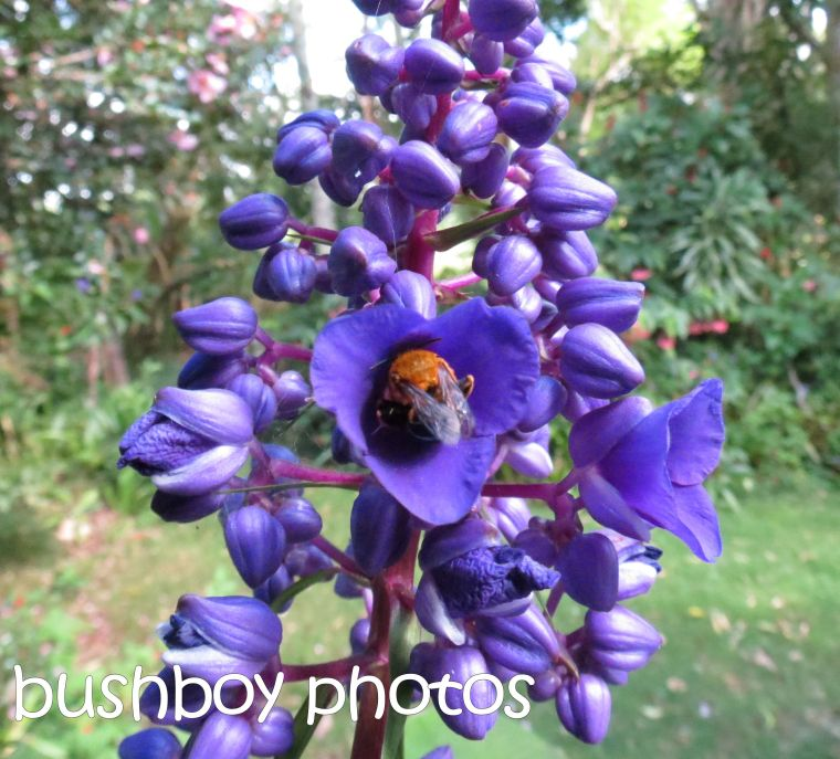 bee_binna burra_crop_named_april 2016