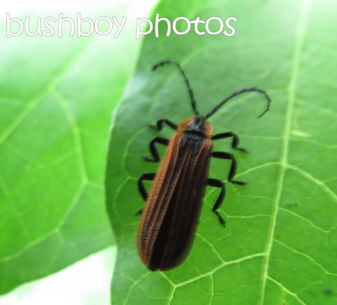 bug_lismore_crop_named_april 2016