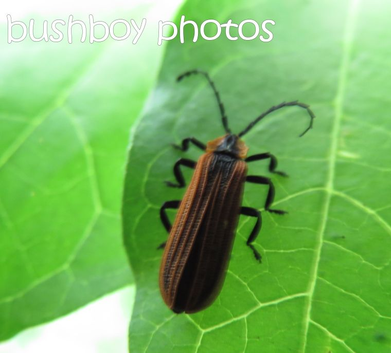 bug_lismore_crop_named_april 2016
