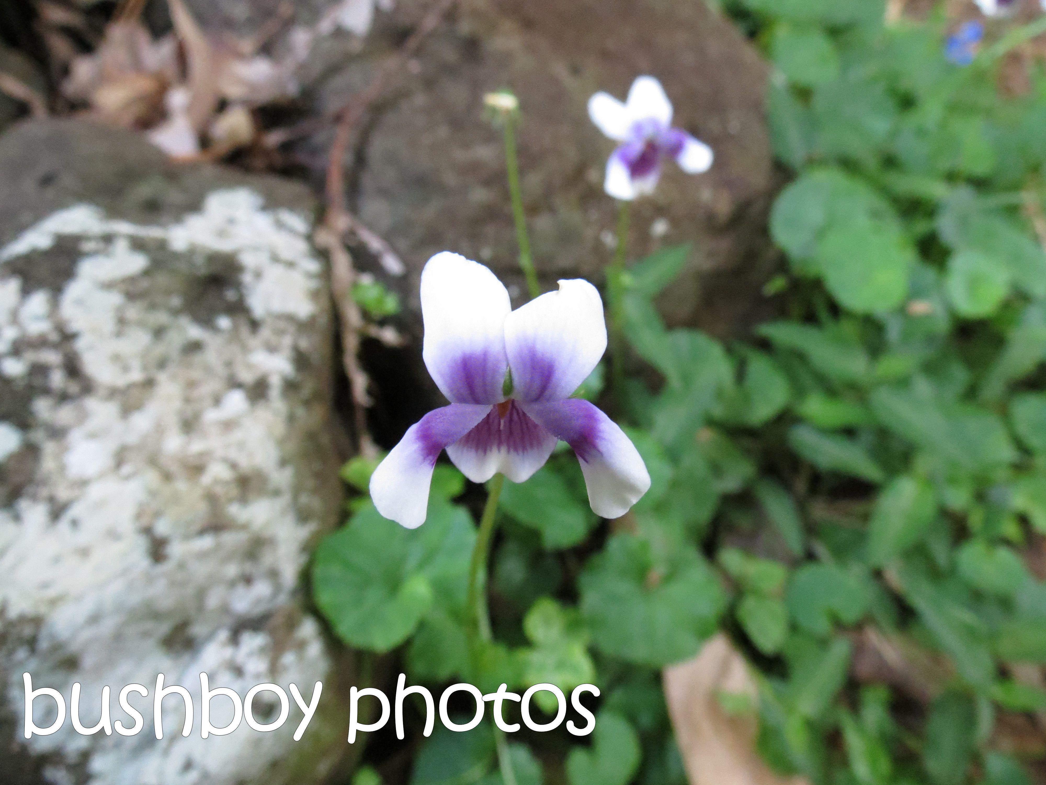 violet_binna burra_named_april 2016
