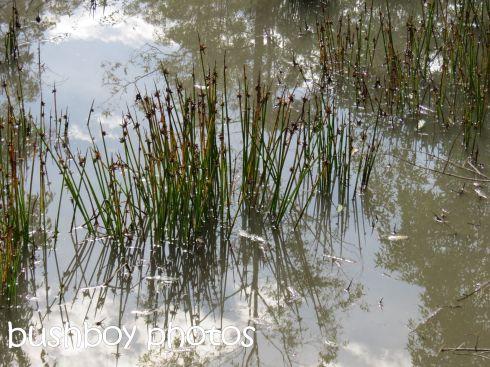 dam_reeds_home_named_june 2016
