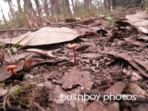 fungi_tiny_named_home_july 2016