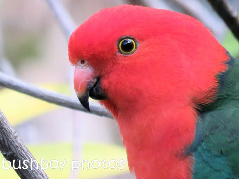 king parrot_named_home_aug 2018