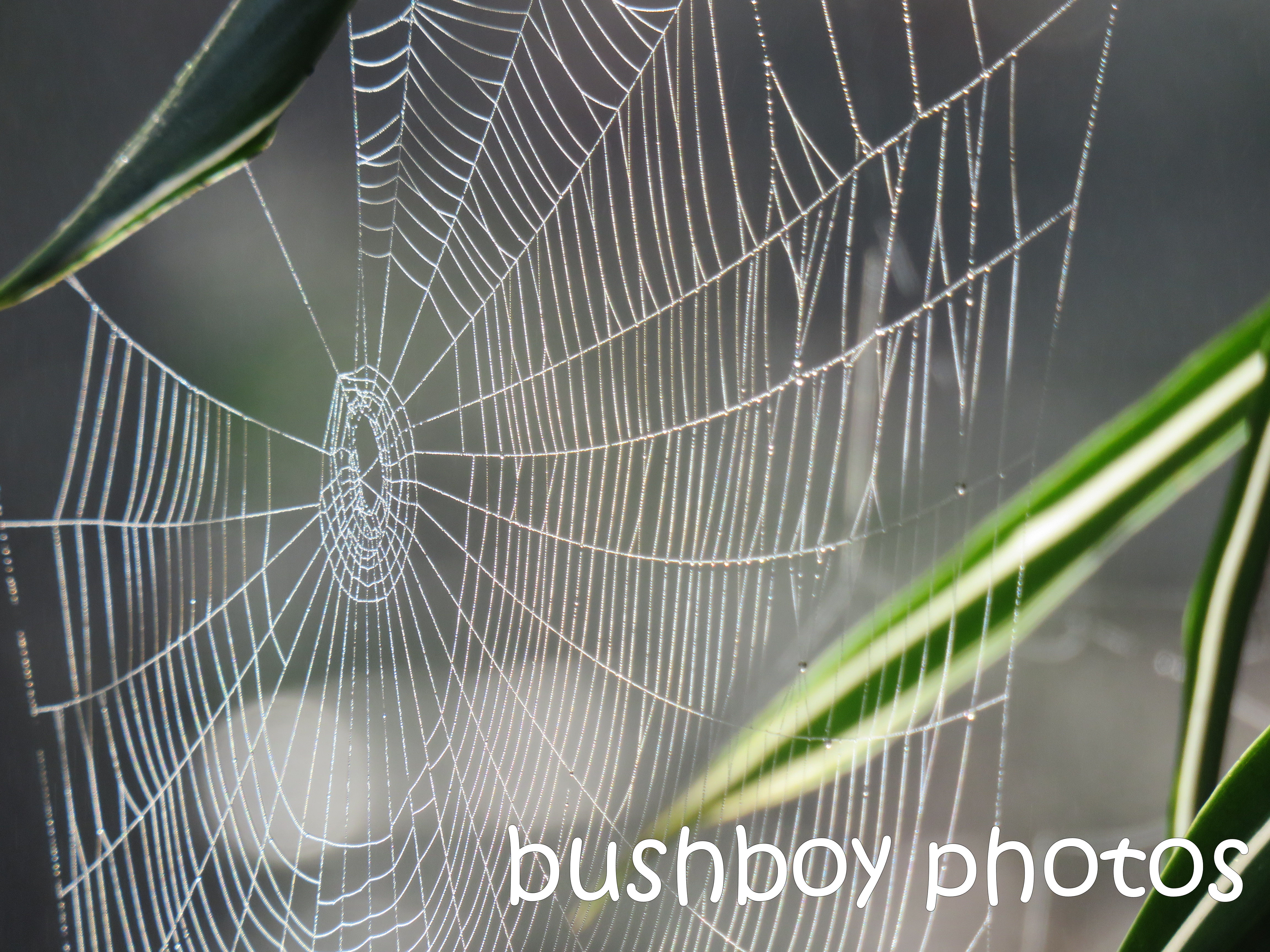 spider web01_named_aug 2016
