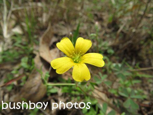 flower_yellow_named_home_sept-2016