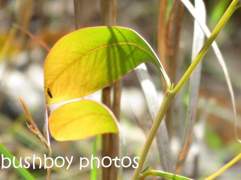 new-leaf_named_home_aug-2016