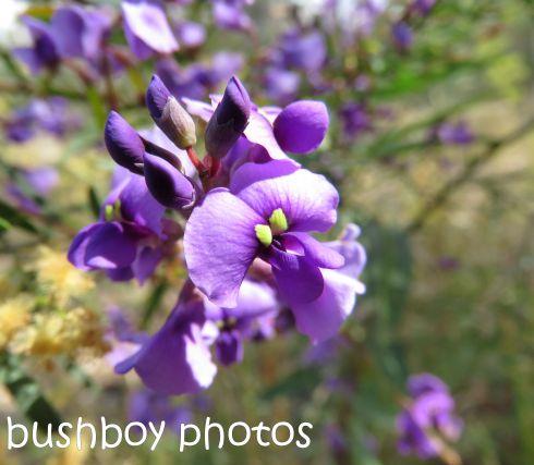 wisteria-native_named_home_aug-2016