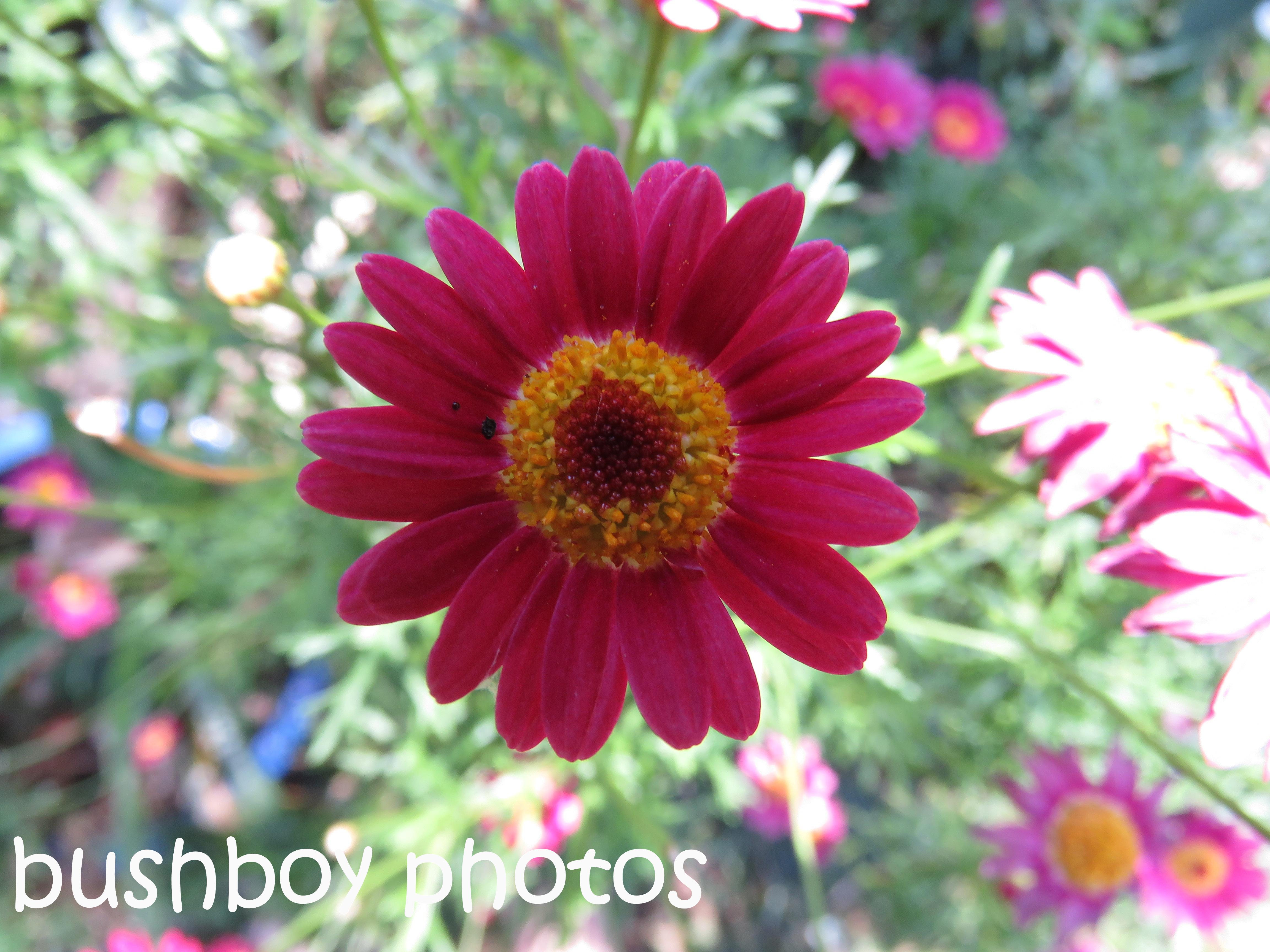 flower02_named_binna-burra_oct-2016