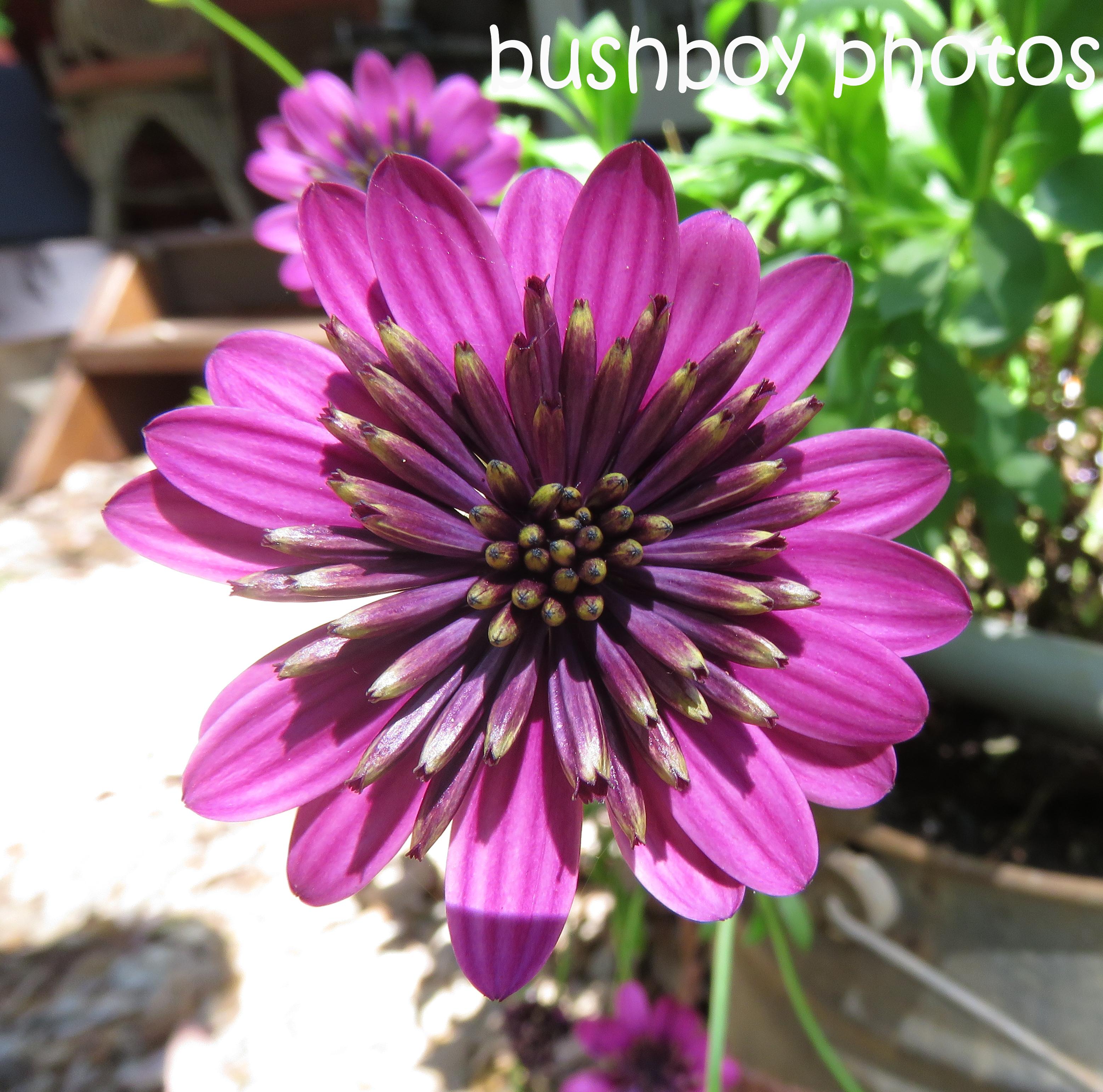 flower_named_binna-burra_oct-2016