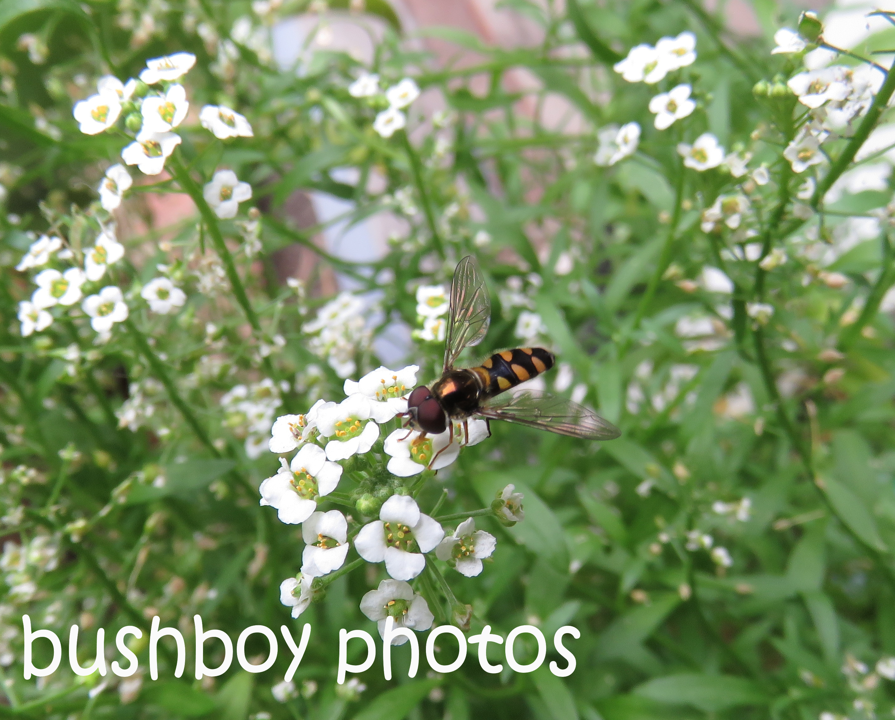 hover-fly_named_home_oct-2106