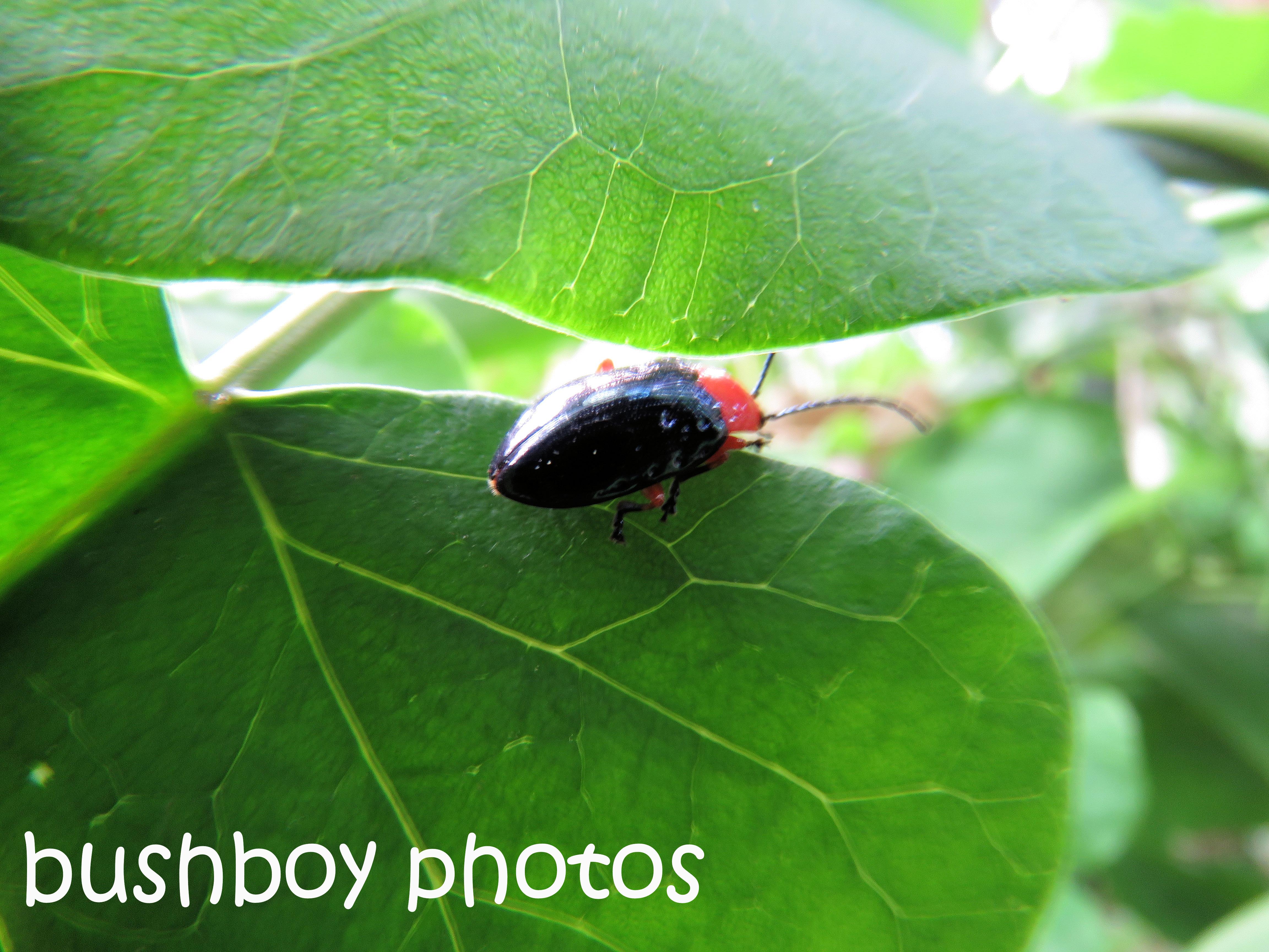 insect_named_binna-burra_oct-2016