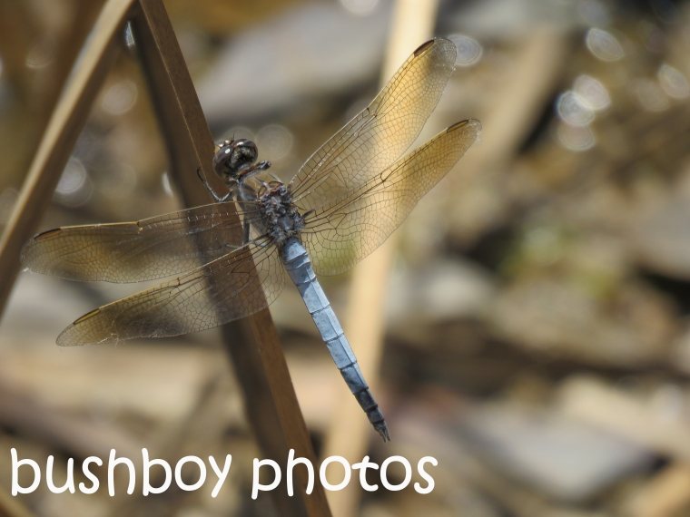 dragonfly_named_home_oct-2016