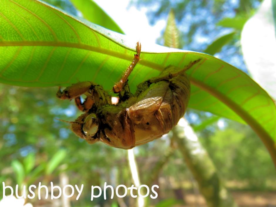 cicada_named_home_dec-2016