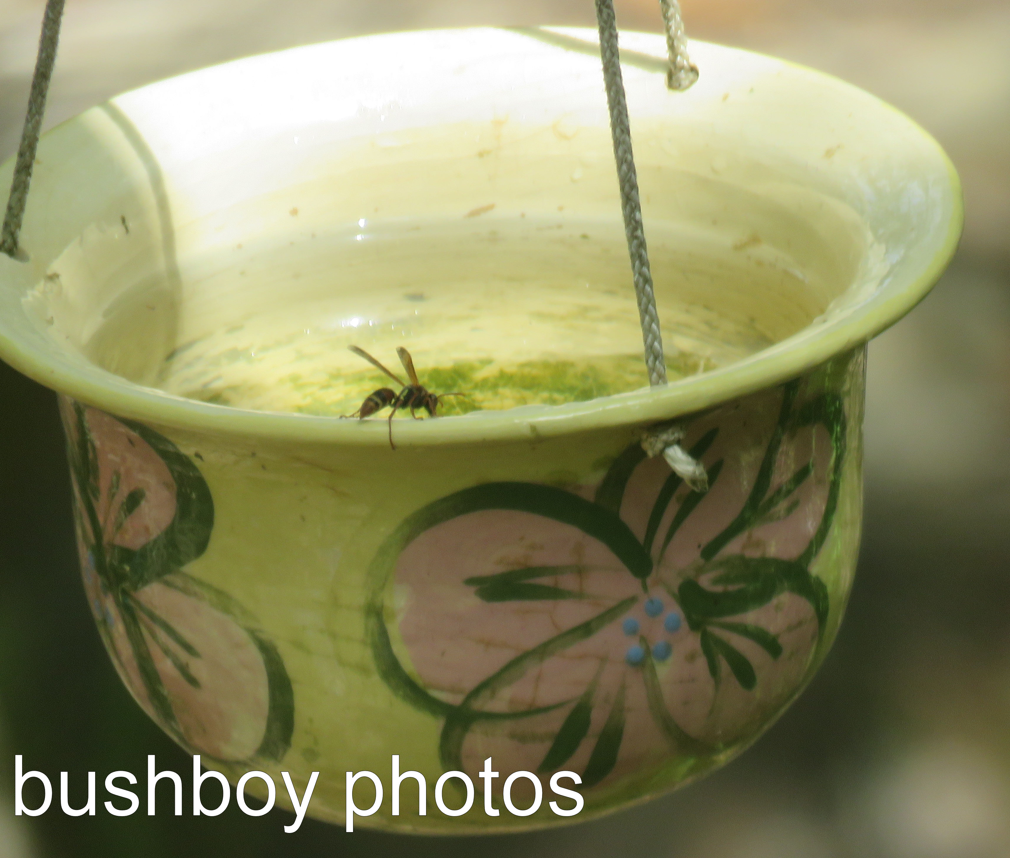 wasp_water-pot_named_home_dec-2016
